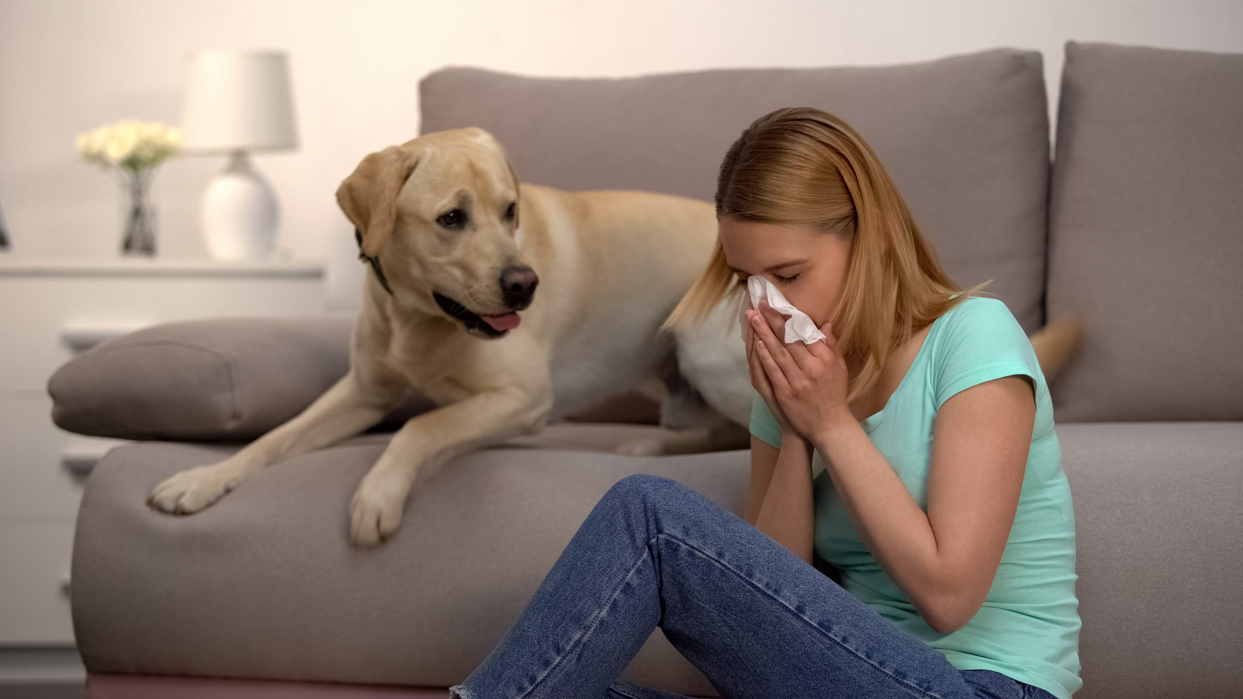 Dog Allergies Are Labradors